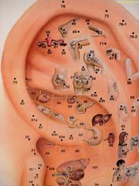 Ucho a orgány